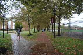 Walking to the Western Shore dorms is made a lot better by the beautiful tress and their changing leaves.