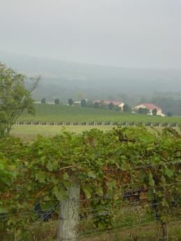 The vineyard stretches across many miles of the Virginia hillsides