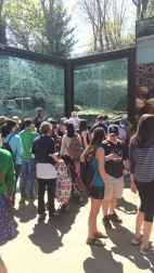 The crowed to see the sloth bear was very large
