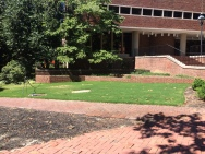 New grass area by the Library